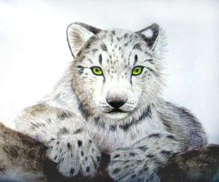 Snow Leopard by superpsyduck