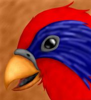 Random Lory by chaoticdreamer