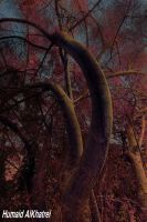 infrared tree by aLdEeb