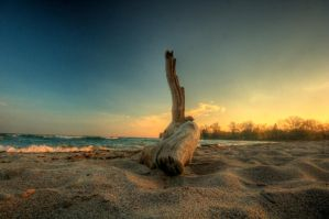 log and sunset waves. by theycome