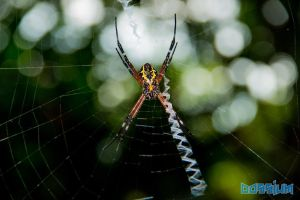 Into the Web by Dossium