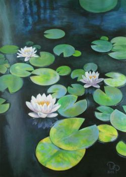 Water lilies by diana-0421
