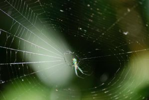 Spider in Web by 2753Productions