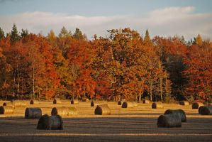 Brahan bales by piglet365