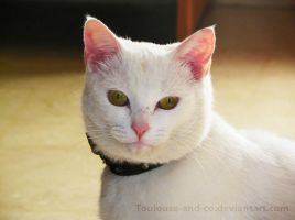 Mirada de Neo by Toulouse-and-Co