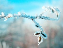 Frosty Magic by bexa