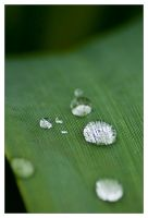 teardrops on green carpet by the-drow