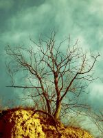 The Horizon Tree by Keshha