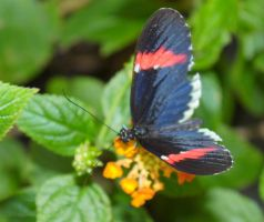 Butterfly I by PamplemousseCeil