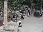 group of penguins by Synthana