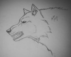 Snarling Wolf by KikkiB