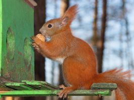 Squirrel's storage place by starykocur