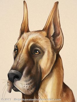 Great dane by IllegalHamsterThe