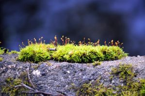 Moss by Disintegrated8