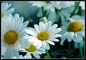 White Spring by kanes