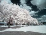 Infrared XIV by ilimel