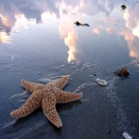 starfish 2 by foureyestock