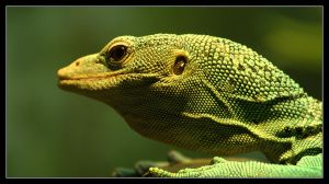 Green Tree Monitor by Karl-B