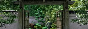 Japanese Garden full size by Platycerium