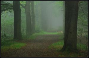 Venturing into a misty wood by jchanders
