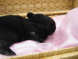 Baby bunny by Elineeey