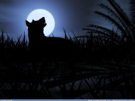 Luna Llena by rlcwallpapers