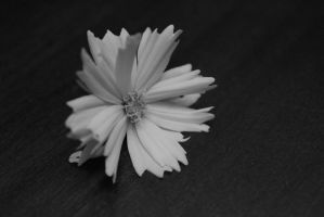 With Ragged Petals... One Can Still Be Beautiful by Katsa2009