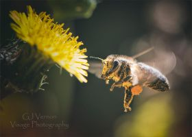 Gathering Pollen by GJ-Vernon