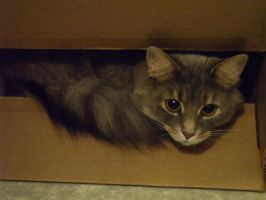 The cat in the box by klody