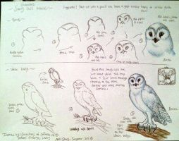 Snowy owl Boron art tutorial by IggySeymour