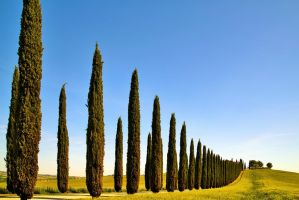 Val d'Orcia 11 by CitizenFresh