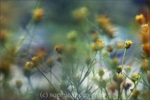 golden seeds by prismes