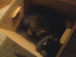 Cat in the box by sporadic-fractal