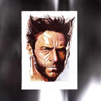 Wolverine by jim00