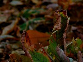 Carpet of leaves by paolica