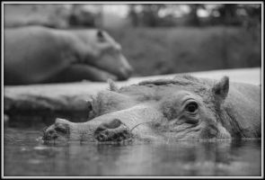 Hippo by Mette456