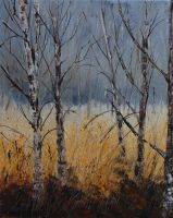 birchtrees by pledent