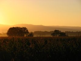 Sunrise over the corn by IronAries