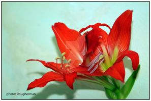 lily 001 by liviugherman