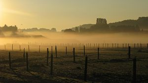 The world belongs to those who get up early by Patguli