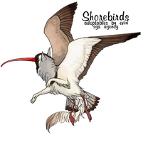 Ibisbill by rice-chex