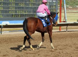 Racehorse Stock 19 by Rejects-Stock