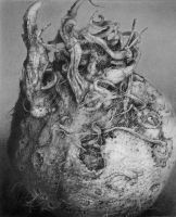 Pencil study of Celeriac by nimra