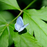 Blue Butterfly by LDFranklin