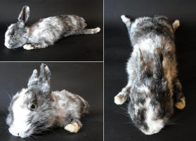 Magpie rabbit softmount by DeerfishTaxidermy