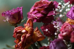 dried flowers by clippercarrillo