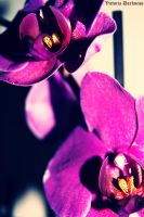 Orquideas by Kayima