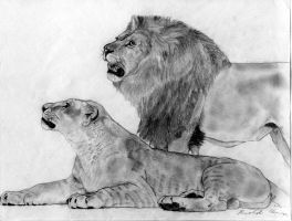 Lions:  The King and his Queen by Ildico