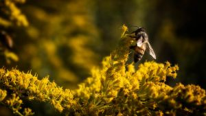 Another Bee by RyoThorn