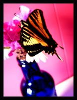 Swallowtail 2 by XSomethingWickedX